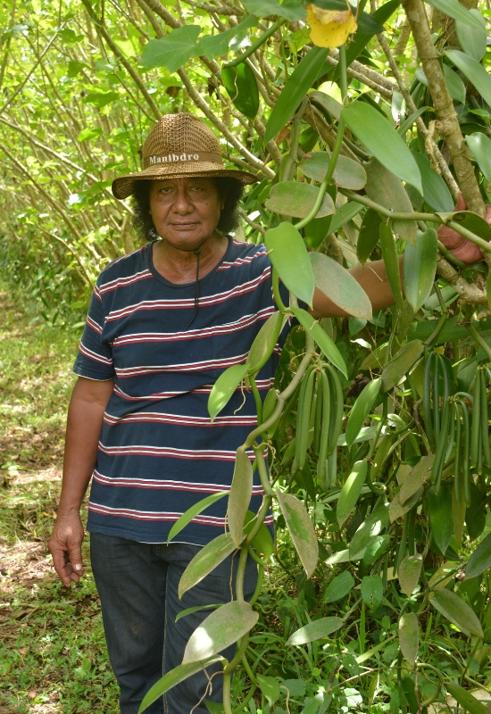 Mr 'Iloa Piu at vanilla plantation site, standing beside a vanilla tree. He is wear a large, brown hat.