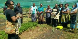Seed Saving Training in Vava'u